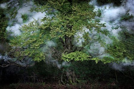 photo between-the-trees-14-2014.jpg Ellie Davies - photographies