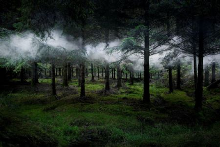 photo between-the-trees-3-2014.jpg Ellie Davies - photographies