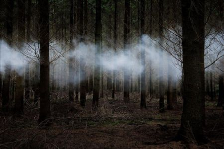 photo between-the-trees-6-2014.jpg Ellie Davies - photographies