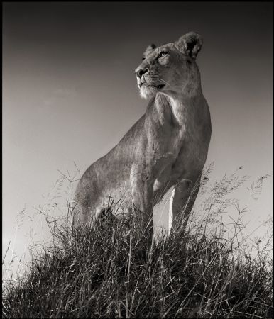 photo nick-brandt---lioness-on-mound.jpg Collectible V - photographies