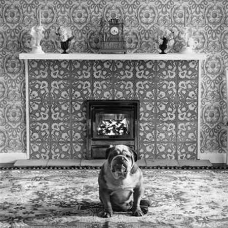 photo 005-Dog-EE.jpg Elliot Erwitt - photo exhibition