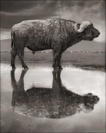 photo 002_by_Nick_Brandt.jpg Nick Brandt - Exposition Photo