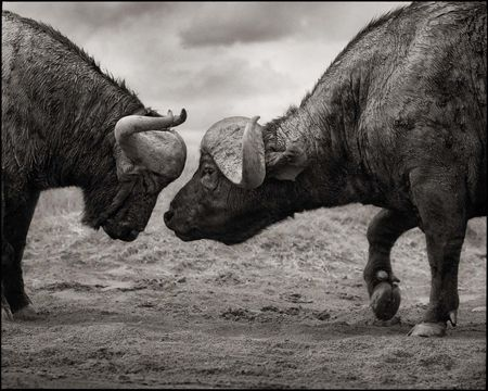 photo 003_by_Nick_Brandt.jpg Nick Brandt - Exposition Photo