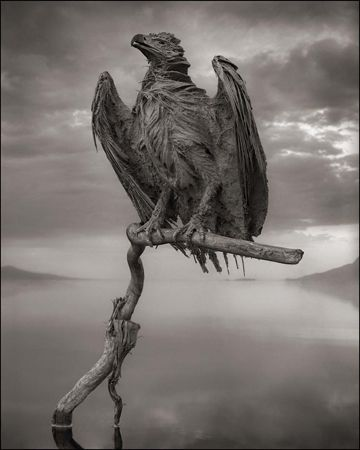 photo 004_by_Nick_Brandt.jpg Nick Brandt - Exposition Photo