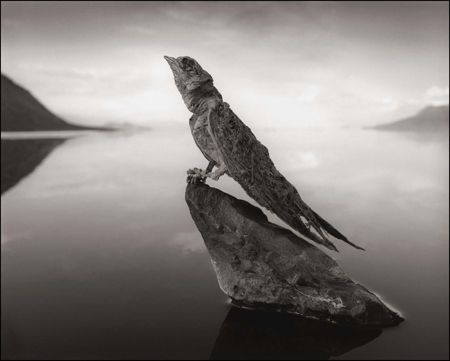 photo 005_by_Nick_Brandt.jpg Nick Brandt - Exposition Photo