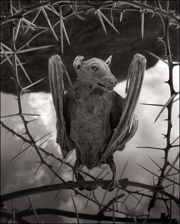 photo 006_by_Nick_Brandt.jpg Nick Brandt - Exposition Photo