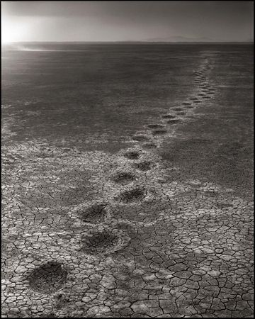 photo 007_by_Nick_Brandt.jpg Nick Brandt - Exposition Photo