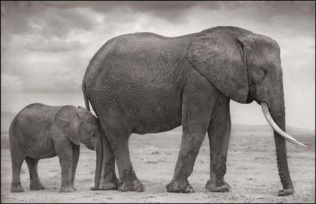photo 008_by_Nick_Brandt.jpg Nick Brandt - Exposition Photo