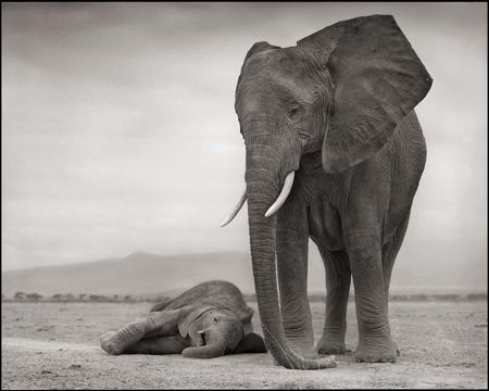 photo 009_by_Nick_Brandt.jpg Nick Brandt - Exposition Photo
