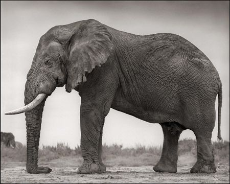 photo 010_by_Nick_Brandt.jpg Nick Brandt - Exposition Photo