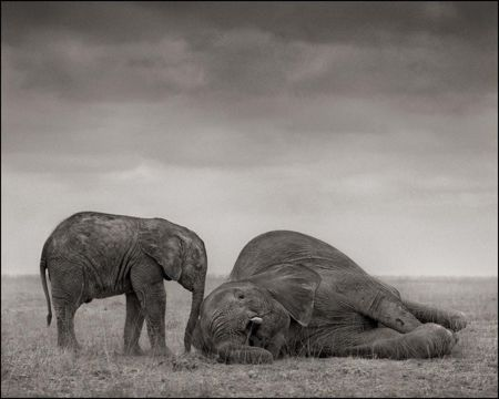 photo 011_by_Nick_Brandt.jpg Nick Brandt - Exposition Photo