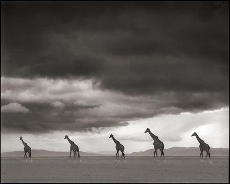 photo 012_by_Nick_Brandt.jpg Nick Brandt - Exposition Photo