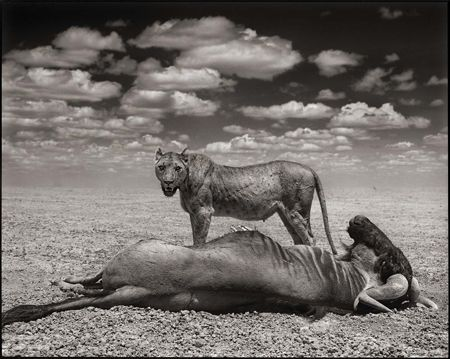 photo 013_by_Nick_Brandt.jpg Nick Brandt - Exposition Photo