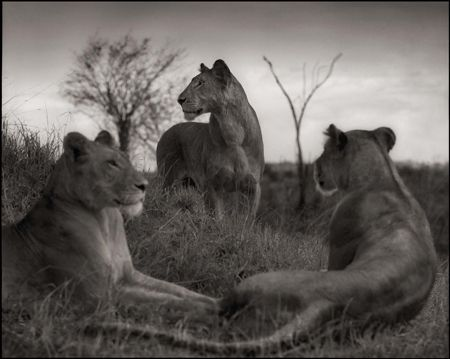photo 014_by_Nick_Brandt.jpg Nick Brandt - Exposition Photo
