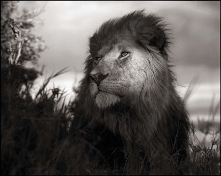 photo 015_by_Nick_Brandt.jpg Nick Brandt - Exposition Photo