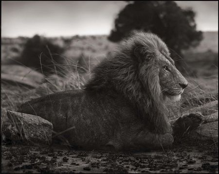 photo 016_by_Nick_Brandt.jpg Nick Brandt - Exposition Photo