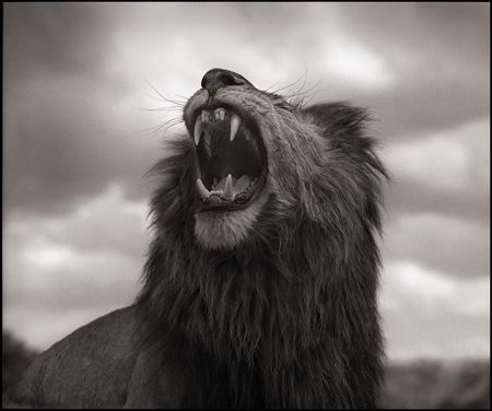 photo 017_by_Nick_Brandt.jpg Nick Brandt - Exposition Photo