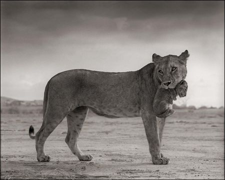 photo 019_by_Nick_Brandt.jpg Nick Brandt - Exposition Photo