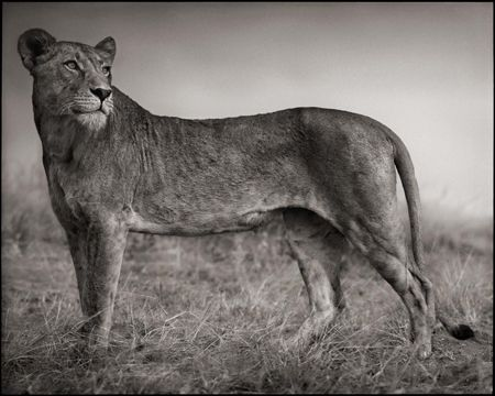 photo 020_by_Nick_Brandt.jpg Nick Brandt - Exposition Photo