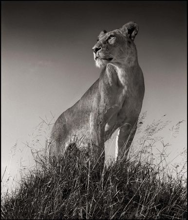 photo 021_by_Nick_Brandt.jpg Nick Brandt - Exposition Photo