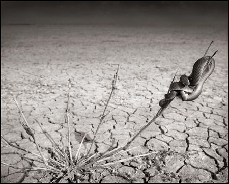 photo 022_by_Nick_Brandt.jpg Nick Brandt - Exposition Photo