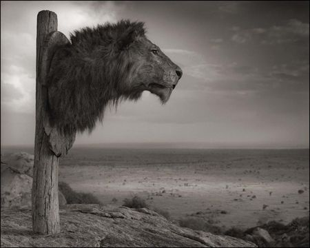 photo 025_by_Nick_Brandt.jpg Nick Brandt - Exposition Photo