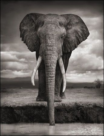 photo 026_by_Nick_Brandt.jpg Nick Brandt - Exposition Photo