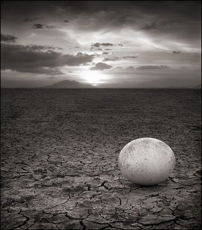 photo 027_by_Nick_Brandt.jpg Nick Brandt - Exposition Photo