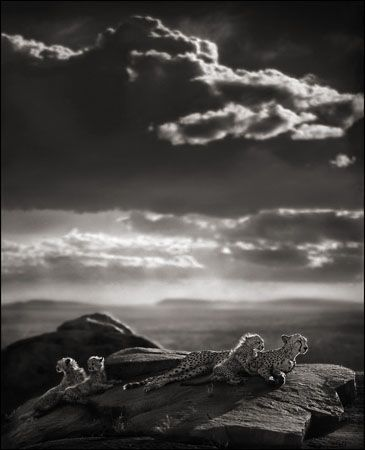 photo 028_by_Nick_Brandt.jpg Nick Brandt - Exposition Photo
