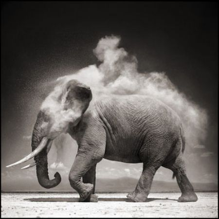 photo 029_by_Nick_Brandt.jpg Nick Brandt - Exposition Photo