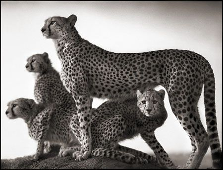photo 030_by_Nick_Brandt.jpg Nick Brandt - Exposition Photo