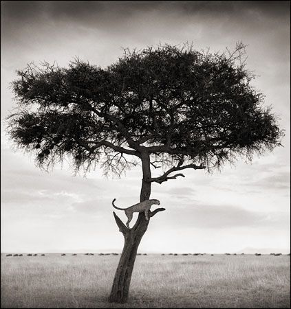 photo 031_by_Nick_Brandt.jpg Nick Brandt - Exposition Photo