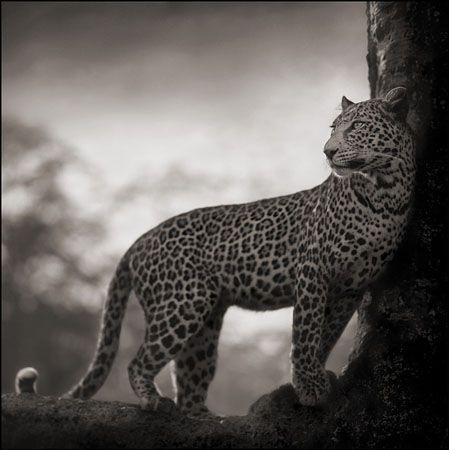 photo 032_by_Nick_Brandt.jpg Nick Brandt - Exposition Photo