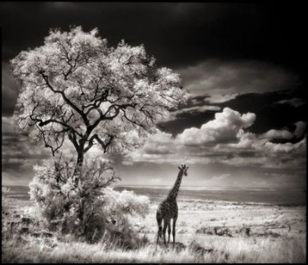 photo 035_by_Nick_Brandt.jpg Nick Brandt - Exposition Photo