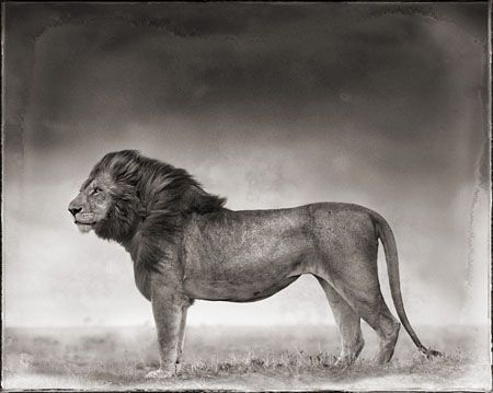 photo 038_by_Nick_Brandt.jpg Nick Brandt - Exposition Photo