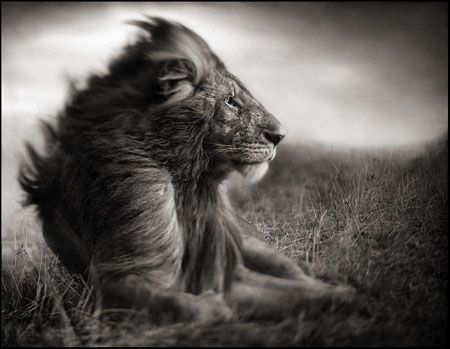 photo 039_by_Nick_Brandt.jpg Nick Brandt - Exposition Photo