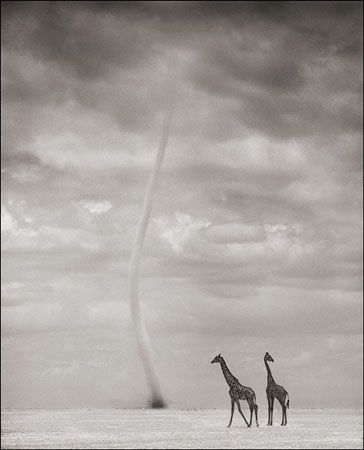 photo 040_by_Nick_Brandt.jpg Nick Brandt - Exposition Photo