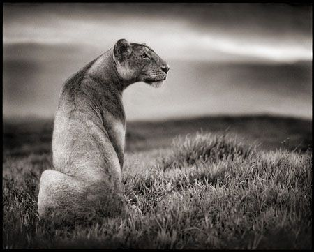 photo 041_by_Nick_Brandt.jpg Nick Brandt - Exposition Photo