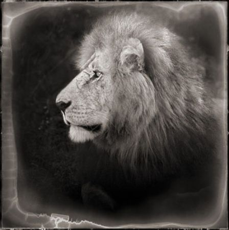 photo 042_by_Nick_Brandt.jpg Nick Brandt - Exposition Photo