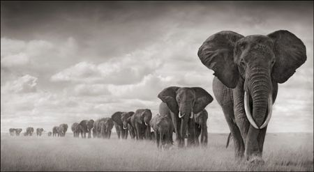 photo 044_by_Nick_Brandt.jpg Nick Brandt - Exposition Photo