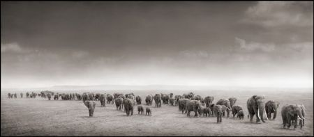 photo 045_by_Nick_Brandt.jpg Nick Brandt - Exposition Photo