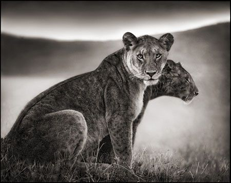 photo 046_by_Nick_Brandt.jpg Nick Brandt - Exposition Photo