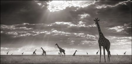 photo 047_by_Nick_Brandt.jpg Nick Brandt - Exposition Photo