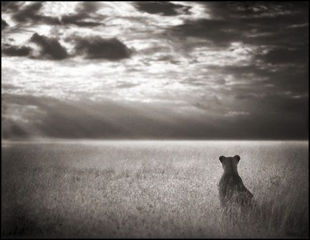 photo 048_by_Nick_Brandt.jpg Nick Brandt - Exposition Photo