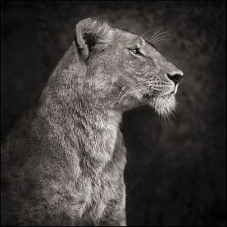 photo 049_by_Nick_Brandt.jpg Nick Brandt - Exposition Photo