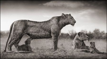photo 051_by_Nick_Brandt.jpg Nick Brandt - Exposition Photo