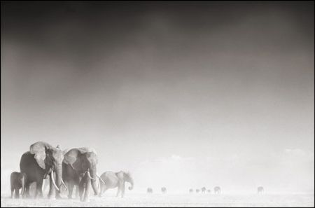 photo 052_by_Nick_Brandt.jpg Nick Brandt - Exposition Photo
