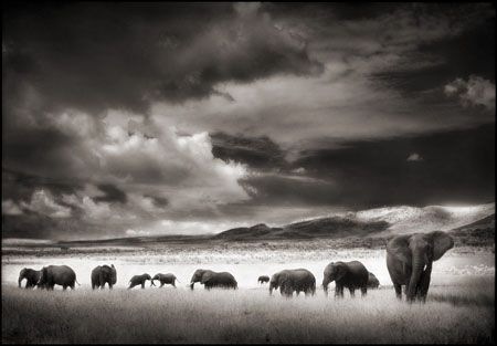photo 053_by_Nick_Brandt.jpg Nick Brandt - Exposition Photo