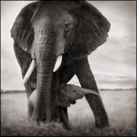 photo 054_by_Nick_Brandt.jpg Nick Brandt - Exposition Photo