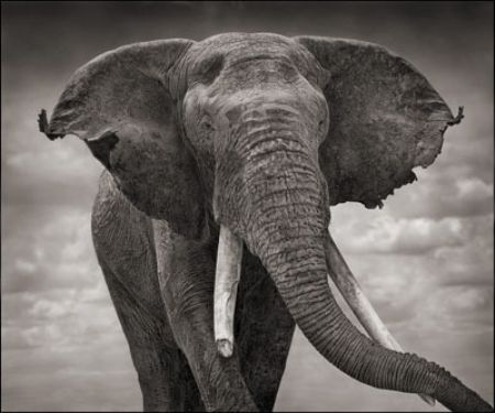 photo 055_by_Nick_Brandt.jpg Nick Brandt - Exposition Photo